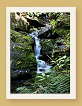 Natural waterfalls feed crystal clear mountain streams at Off the Mapp, Marlborough, New Zealand